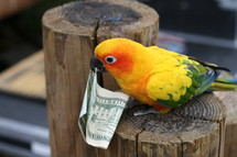 a sun conure holding a twenty dollar bill