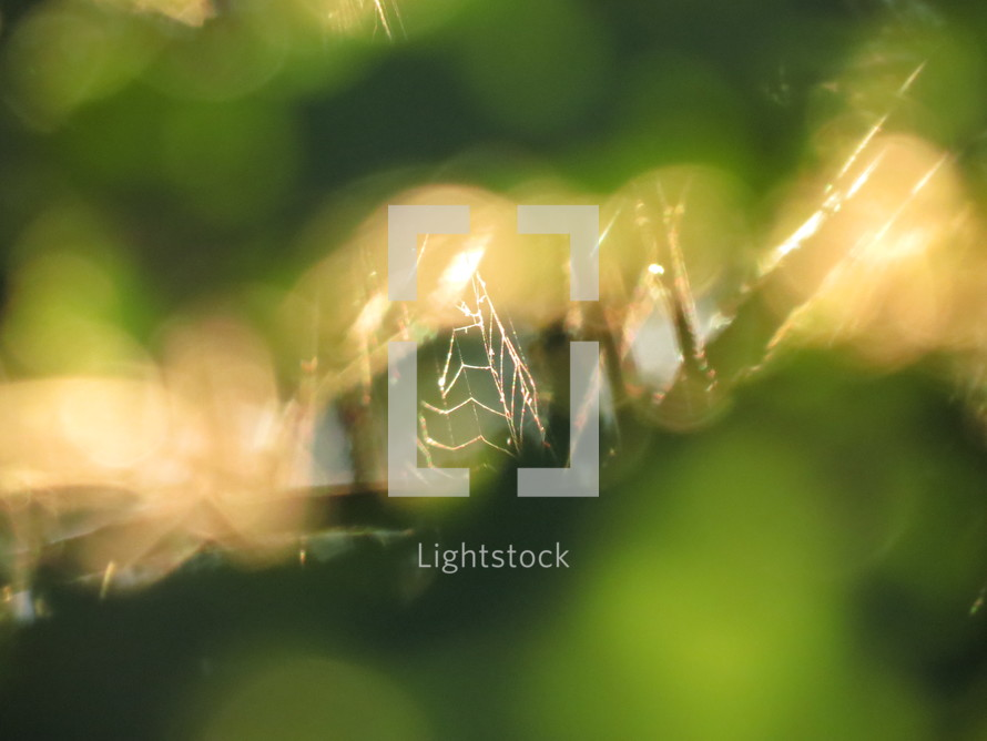 Bokeh spider web.