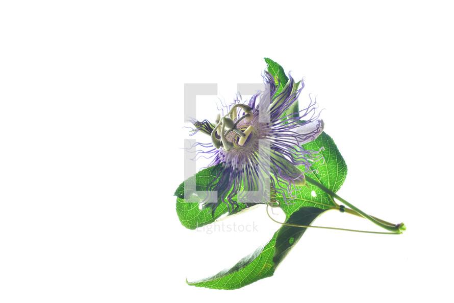 unique purple flower