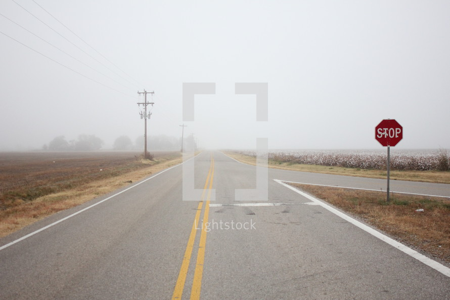 rural road and cotton field