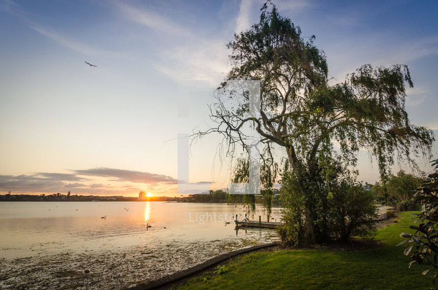 Lake at sunset near green grass and tree, with blue sky and flying bird in the background.