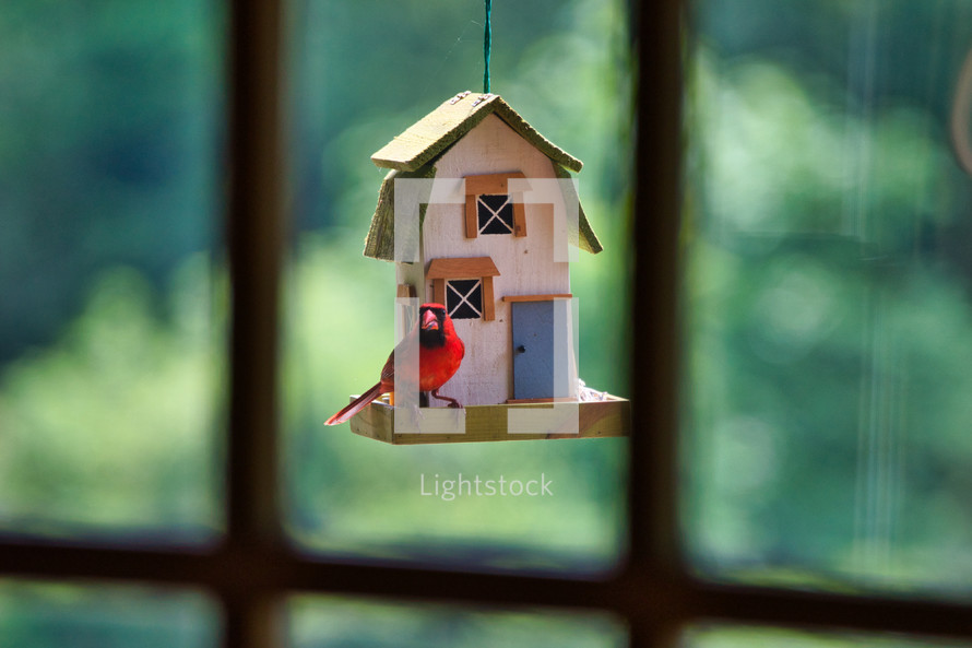 red cardinal bird on a bird feeder