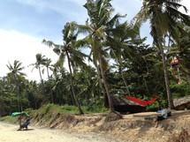 Hammocks hanging on palm trees.