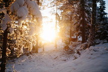 sunlight in a winter forest