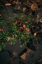 green water plants growing between rocks in a creek