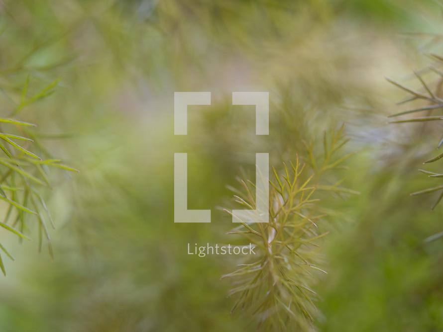 pine needle background