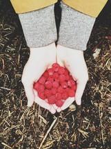 hand full of raspberries