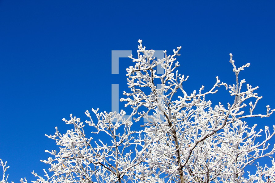 Ice on a winter tree and blue sky.