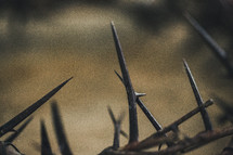 thorns closeup