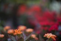 Small orange flowers in a flower garden.