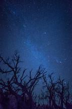 stars in the night sky above a desert landscape