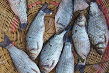 Fresh fish in a basket at morning market