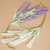 lavender and white flower on tan background