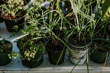 plants in a plastic containers at a garden center
