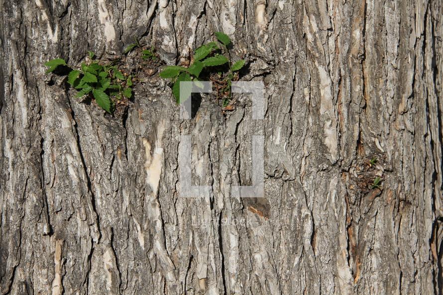 green leaf growth on tree bark