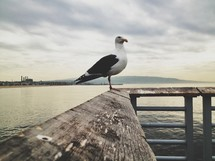 seagull standing on a railing