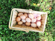 Fresh Eggs Are the Best Eggs