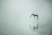 bird hunting over water