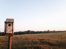 a bird house and open field