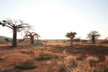 trees on desert land