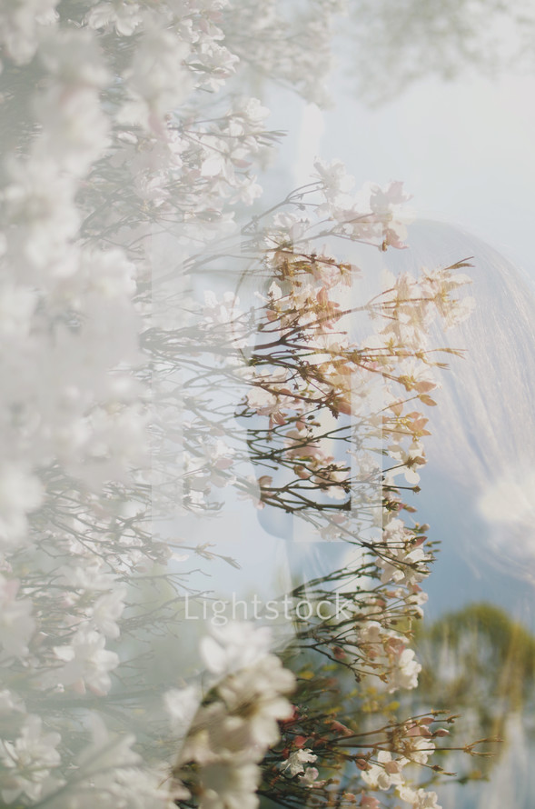 reflection of a woman in glass and spring flowers