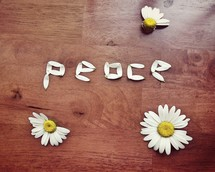 peace from the petals of a daisy