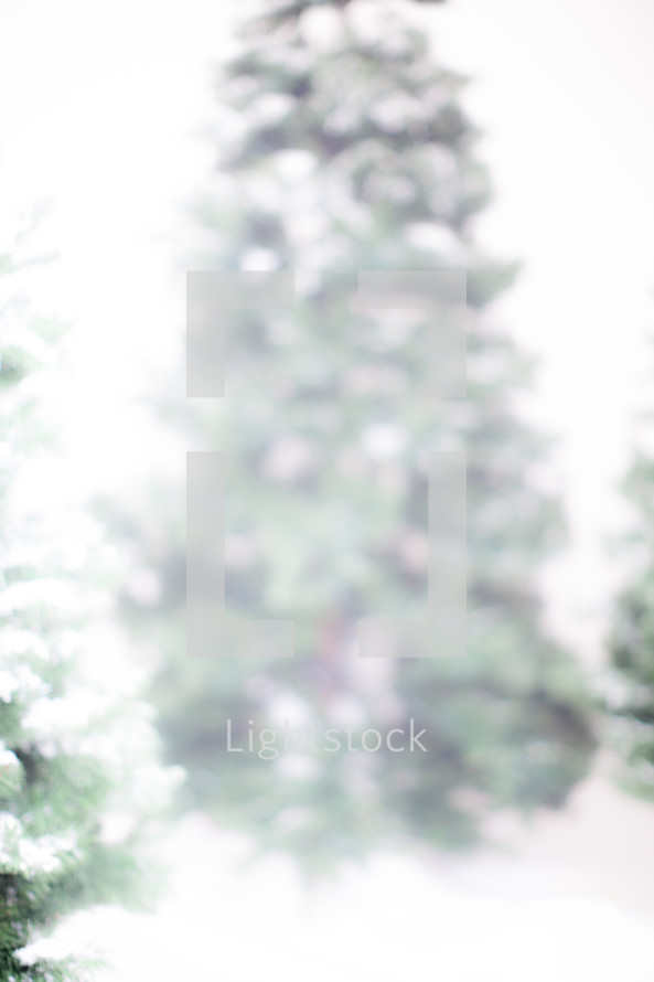snow on pine in winter