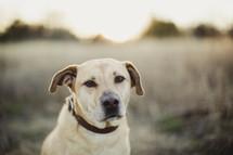 Dog in a field.
