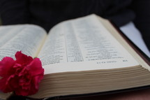 carnation on the pages of an open Bible
