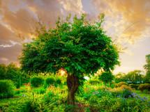 a tree in a flowering garden