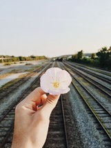 a man holding a flower near railroad tracks