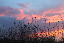 silhouettes of flowers under a pink sky at sunset