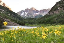 yellow flowers in a meadow and mountain view