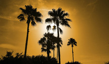 A group of palm tree silhouettes at sunset swaying in the summer breeze somewhere in the tropics during summer time.