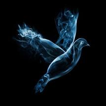 smoke dove
