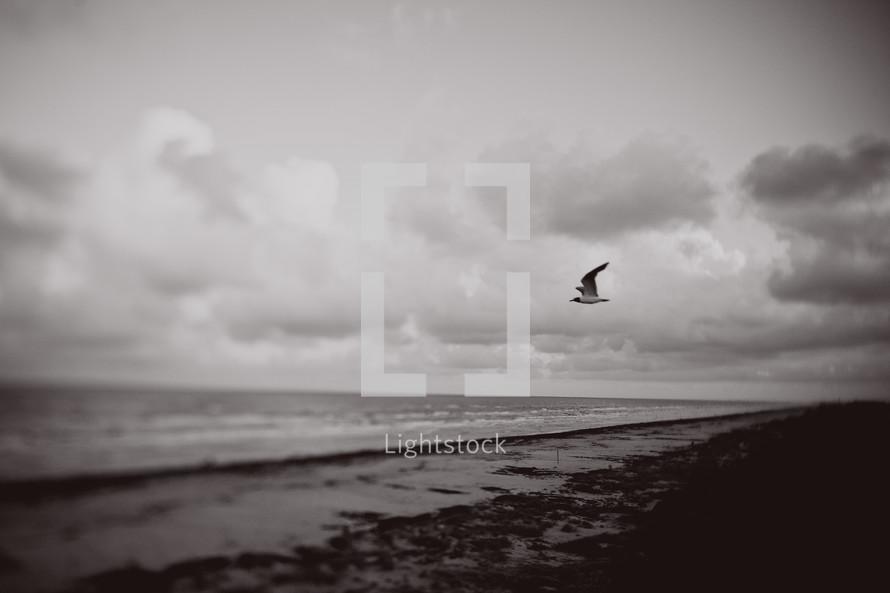 Seagull flying over ocean