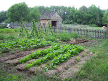 A farm with a garden in rural Virginia with rows of food growing next to a wooden picket fence and small barn with open meadows and woods in the spring time in Virginia.