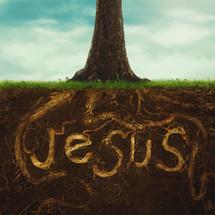 Jesus roots on a tree