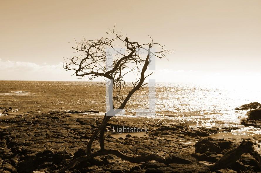 bare tree on a rocky shore