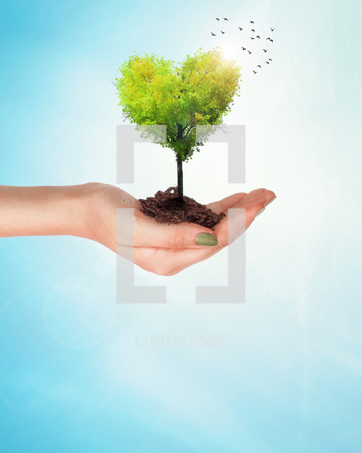hand holding a soil and a tree in the shape of a heart