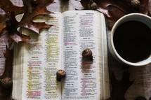 acorns on an open Bible