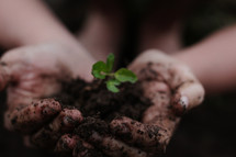 cupped hands with seedling