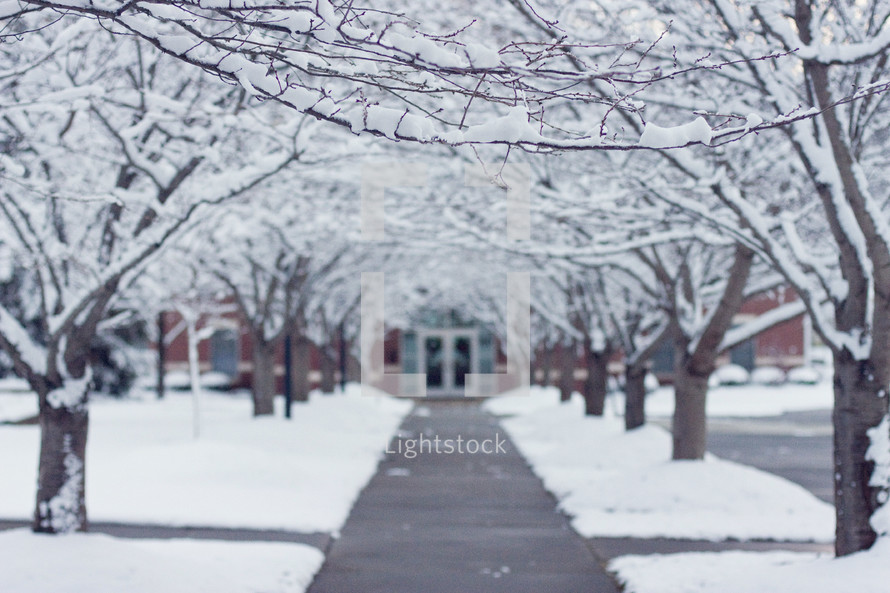 pathway under snow covered trees leading to a Churches doors