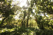 sunlight through the tree canopy in a jungle