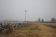 rural road and cotton field in fog