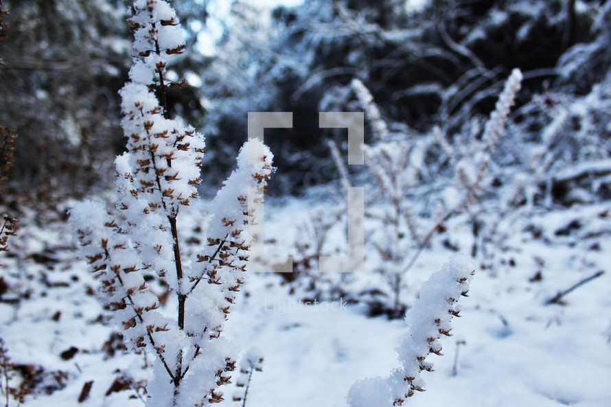 snow on a plants