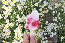 popsicle over field of daisies