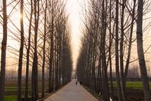 Winter country lane with tall trees at sunset