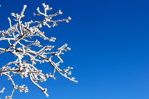 Snow on a tree limb against a cobalt blue sky.