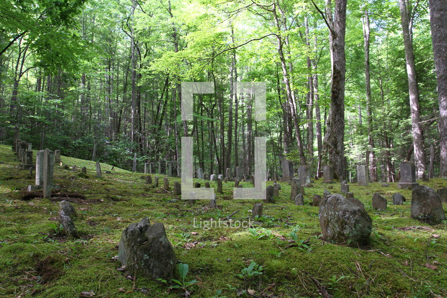 An old cemetery in a forest.